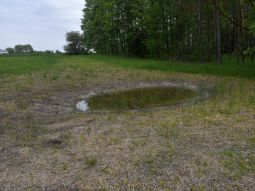 Sub-site 7 'FFH priority Ettling' - Measure C.10: Creation of a temporary small water body as a habitat for amphibians